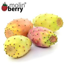 Molin Berry - Mexican Cactus-  Aroma