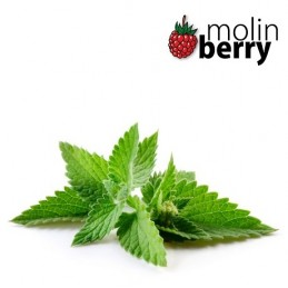Molin Berry - Fresh Mint...
